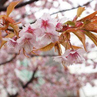 桜が満開!!!綺麗過ぎて時間を忘れて撮影しちゃったぞ!