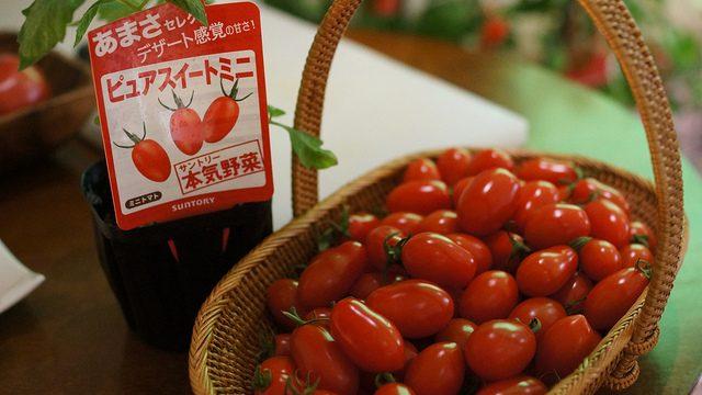 """ブロガーイベント:サントリー本気野菜「""""食べてみたい、を育てよう!""""トマトの世界」 in 六本木農園に行ってきた。"""