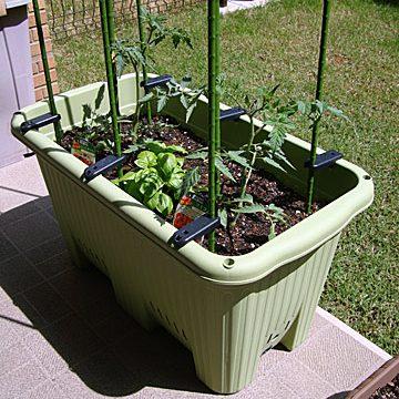 マンションのバルコニーでトマトを育てよう!