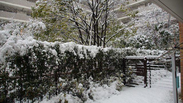 関東で数年ぶりの大雪らしいのでわんぱくに楽しんでみたぞ!