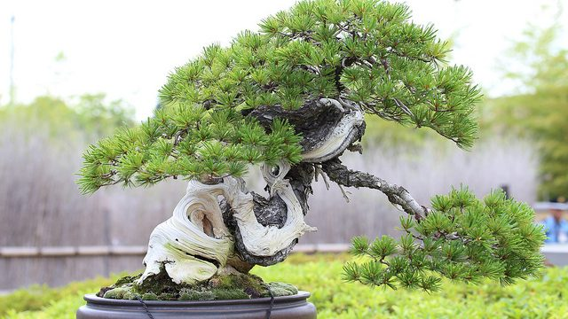 【大宮盆栽×タムロン】大宮盆栽美術館で盆栽撮影にチャレンジ!ブロガーイベントに参加してきたぞ!