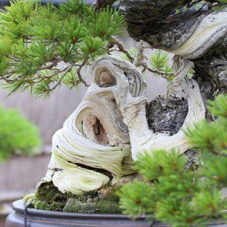 【盆栽の美しさに衝撃!】大宮にある盆栽美術館で盆栽の魅力を感じてきたぞ! #盆栽フォト