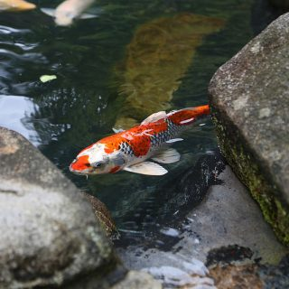 【池があるお宅注目!】ヒダカの高圧洗浄機「HK-1890」を使って庭の池を掃除!めちゃくちゃ綺麗になったぞ!