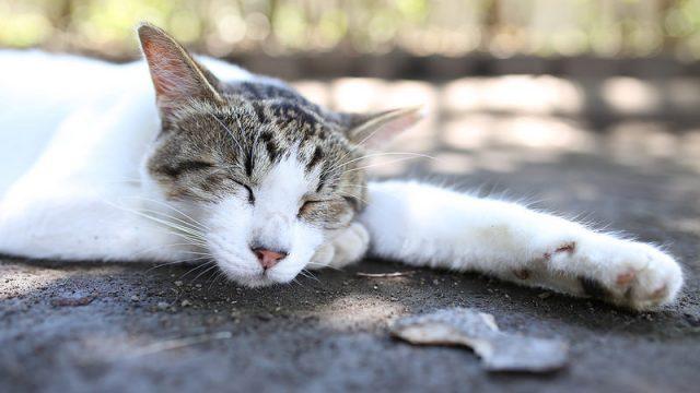 SIMGA「35mmF1.4 DG HSM」とEOS6Dで野良猫を撮影!メッチャくっきり綺麗な写真が撮れたぞ!