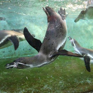 【川崎市】無料でペンギンやシマウマが見れる!「夢見ヶ崎動物公園」に行ってきたぞ!
