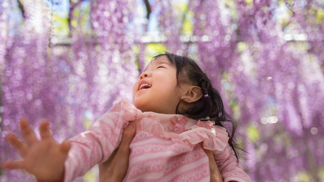 【写真で紹介!】「あしかがフラワーパーク」の藤の花が超絶おススメだぞ!