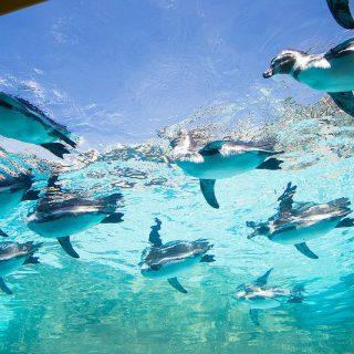想像以上でビビる!→ペンギンの群れが空を飛ぶ!とべ動物園が楽しいぞ!