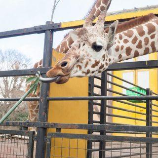 羽村市観光1日目!動物園に行って室内プールの滑り台など子連れでも楽しめるぞ!【PR】 #tokyoreporter #tamashima #tokyo #hamura