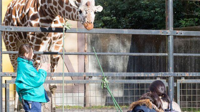 キリンやハイエナにエサやり可能!東京都「羽村市動物公園」は子連れで行きたいぞ!【PR】 #tokyoreporter #tamashima #tokyo #hamura