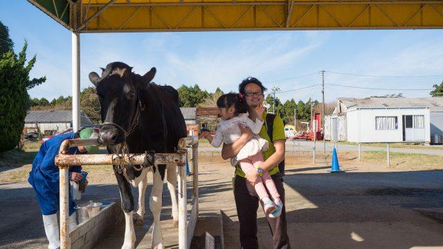 乳牛の乳搾り体験やヒツジに触れる!千葉「マザー牧場」は東京・神奈川からも近くて子連れで行くと楽しいぞ!