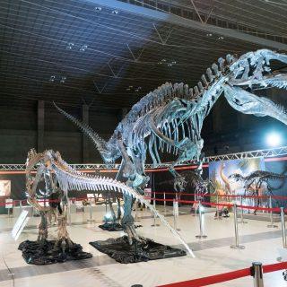 「えひめ大恐竜博」で恐竜の化石を触ったりアンモナイト発掘体験!年末年始もやってて良いぞ!
