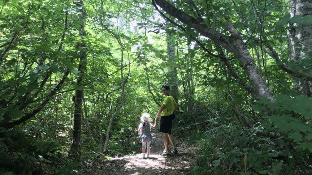 夏はジブリの世界観!?長野県小谷村の「鎌池」は紅葉の時期は最高だぞ! #いちばん美しいところ
