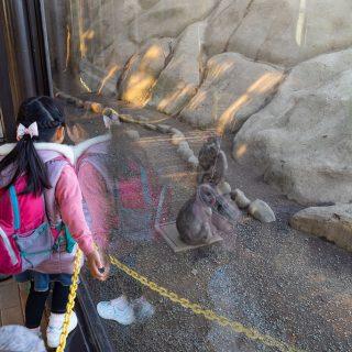 高尾山に行くなら!「高尾山さる園・野草園」が面白いぞ!【PR】 #たま発 #tamahatsu #多摩の魅力発信プロジェクト #高尾山さる園