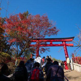 子どもと秋の高尾山!頂上からの富士山や美しい紅葉を堪能したぞ!【PR】 #たま発 #tamahatsu #多摩の魅力発信プロジェクト #高尾山