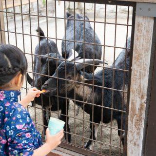 童謡「夕焼小焼」のモデル地!八王子市にある #夕やけ小やけふれあいの里 が動物と触れ合えたり自然を満喫できるぞ!【PR】 #たま発 #tamahatsu #多摩の魅力発信プロジェクト