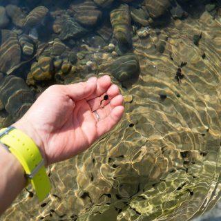 二子玉川でおたまじゃくしを見つけよう!「二子玉川公園」が自然に触れられる遊び場だぞ!