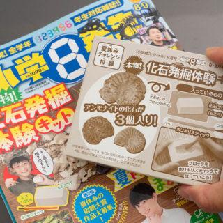 前代未聞!本物のアンモナイトの化石が3つ!雑誌小学8年生の夏休み号がすごいぞ!