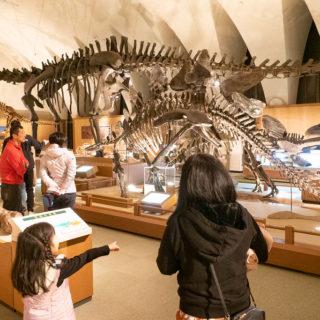 子連れで楽しい!静岡県の東海大学「恐竜のはくぶつかん」が迫力すごいぞ!