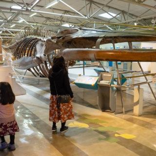 海の科学をテーマにした日本唯一の博物館!静岡県の東海大学「海のはくぶつかん」が子連れにオススメだぞ!
