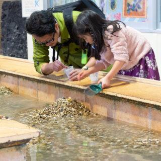 宝石探し体験ができる静岡県富士宮市「奇石博物館」の宝石わくわく広場が楽しいぞ!