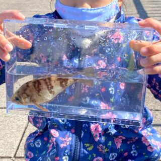 子どもと魚など水中の生き物を観察・撮影しやすい!「お魚観察撮影ケース」が良いぞ!